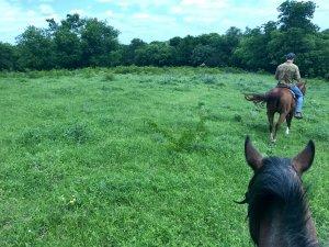 horseback view