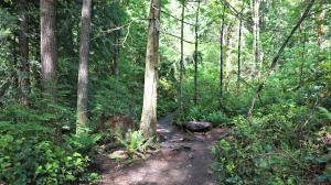 little si trail seattle washington